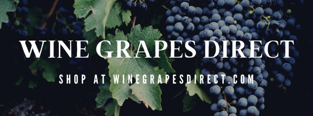 WineGrapesDirect